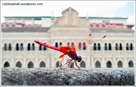 Dragonfly-KL