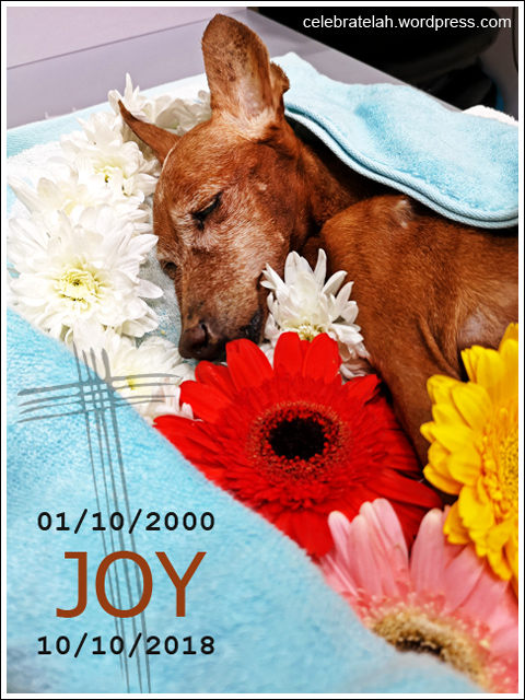 Thank-You-Joy-01